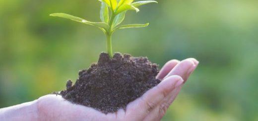 produse fitosanitare